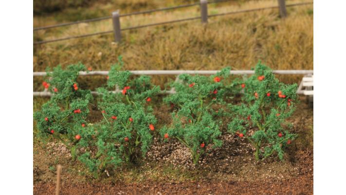 18 PLANTS DE TOMATE