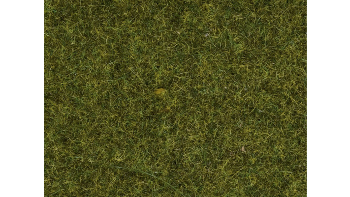 Herbe, Prè, 1,5 mm
