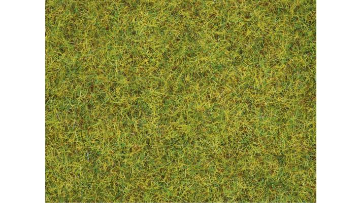 Herbe, pré d'été, 2,5 mm