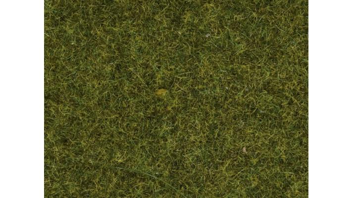 Herbe, Prè, 2,5 mm