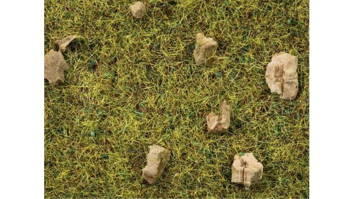 Herbe, Près De Montagne, 2,5 mm