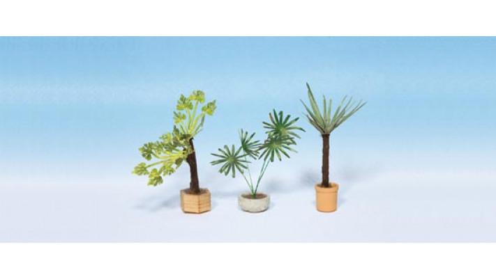 Plantes d'ornement