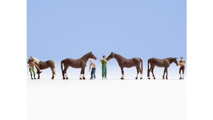 Soin de cheval