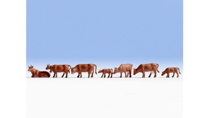 Vaches, brunes