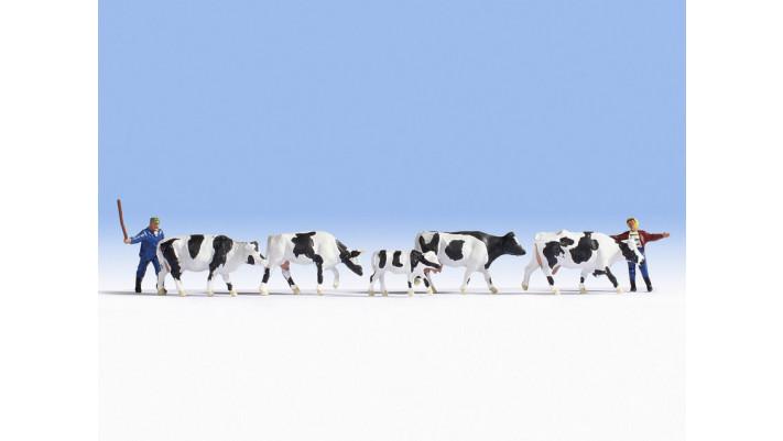 Gardien et troupeau de vaches