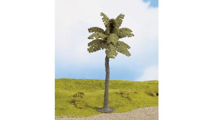 Palmier, 15 cm