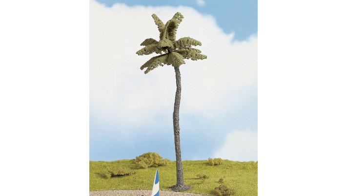 Palmier, 19 cm