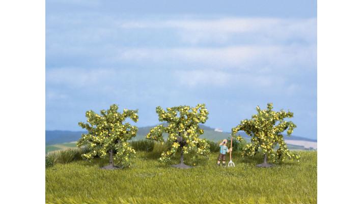 Citronniers 3 pcs., 4 cm