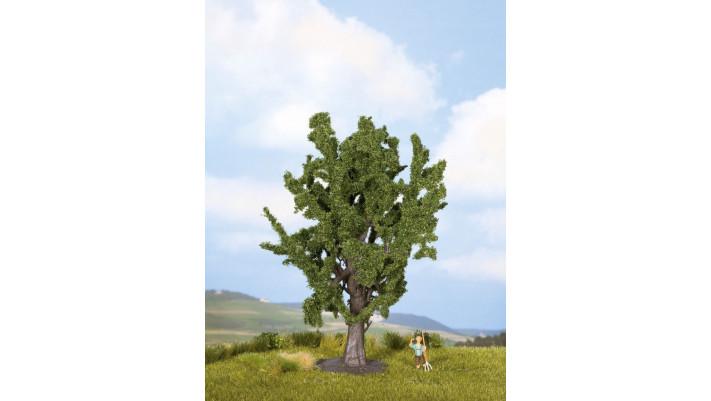 Chêne, 15 cm
