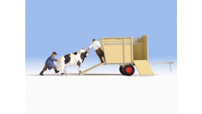 Transport de boeuf