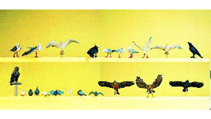 pigeons,corbeaux etc...