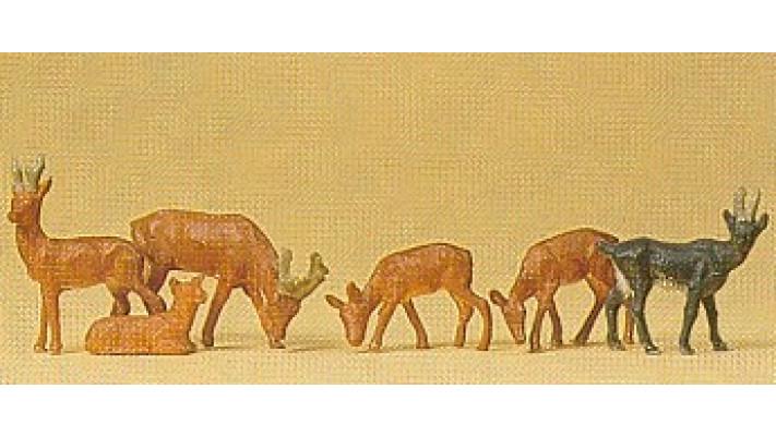 chevreuils chamois