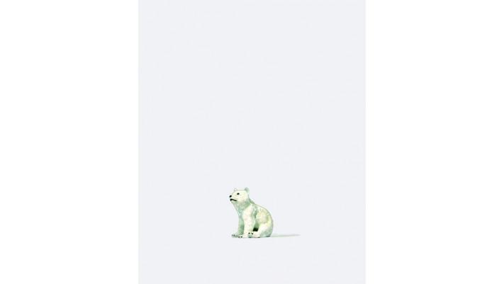 jeune ours polaire