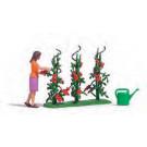 Récolte tomates H0