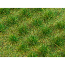 Touffes herbe foncée