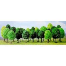 25 arbres feuillus assortis n z