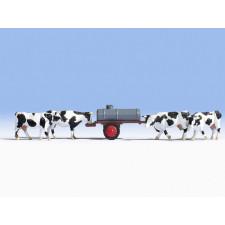 Vaches à l'abreuvoir