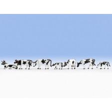 Vaches, blanc-noir