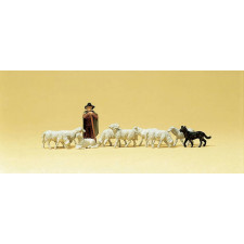 bergers moutons chiens