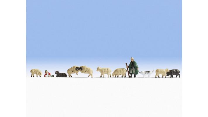 Moutons et berger