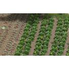 Champs de legumes et salades