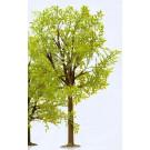 Tres grand arbre 350 mm